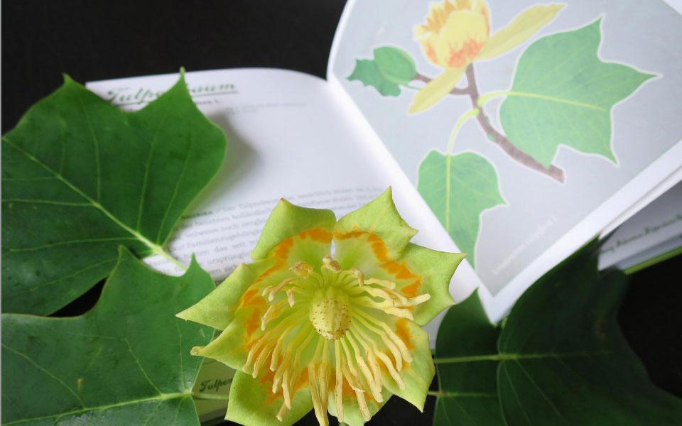 Buch Garten für die Seele