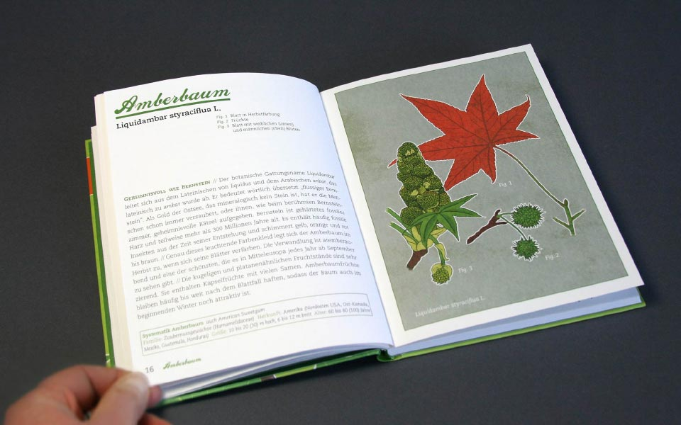 Buch Garten für die Seele Illustration