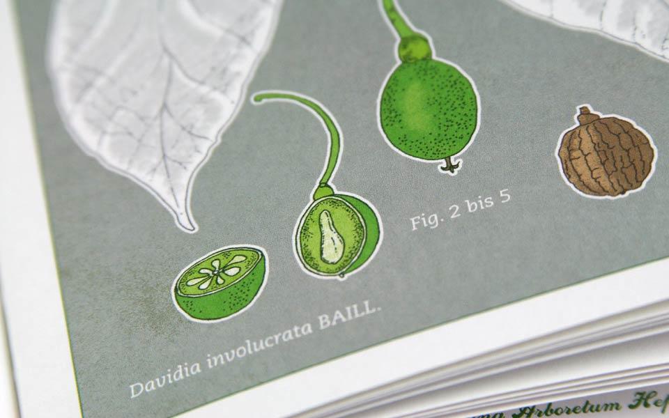 1-2 Frucht Illustrationen Ausschnitt