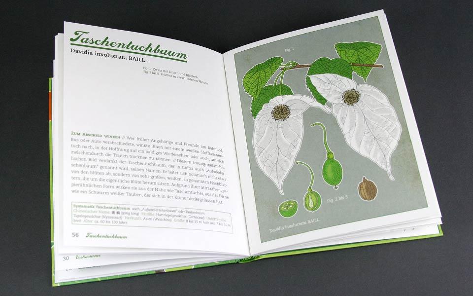 1-3 Taschentuchbaum Illustration Buch