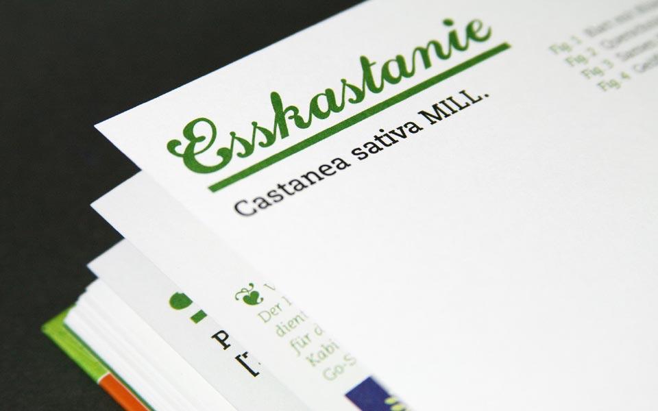 1-4 Esskastanie castanea sativa Typographie
