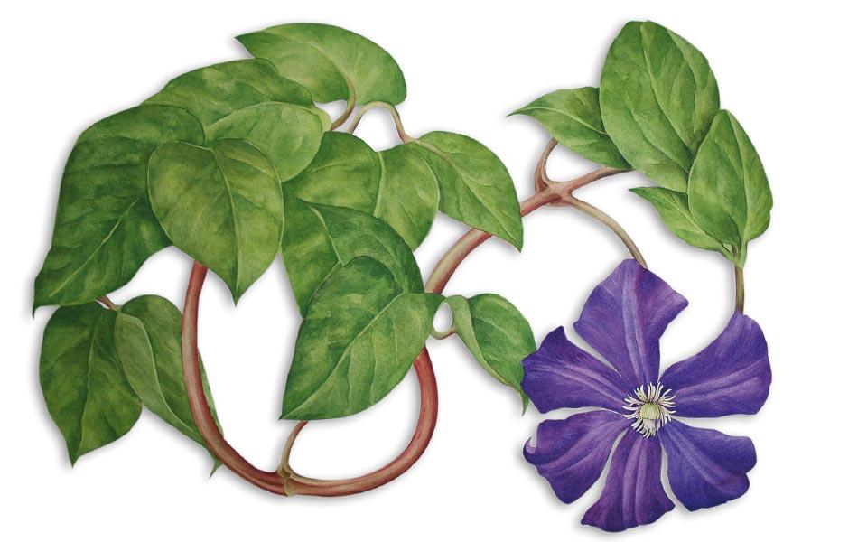 1-4 Tania Engelke Blumenillustration